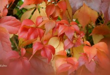 for lovers of nature – autumn colors